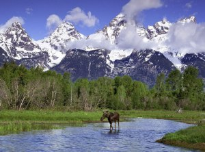 grand-teton-national-park-moose